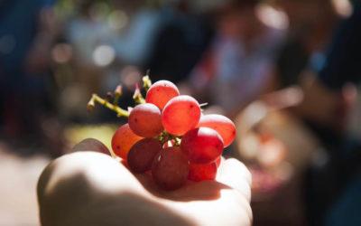 6 razones para consumir productos locales