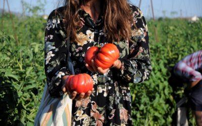 Tomacor, así son nuestros tomates